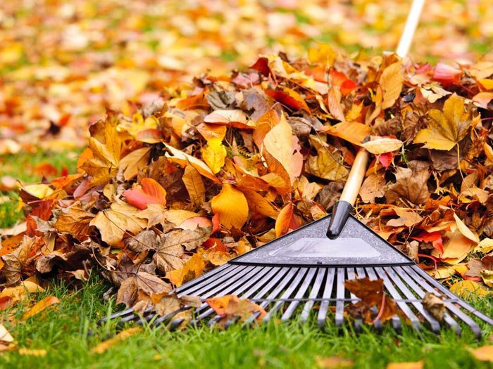 Lawn Care, Landscaping Design: Fall Cleanup Raking